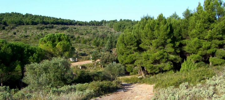 Le trail de Mireval (28/01/18) : un trail de «Hérault» !